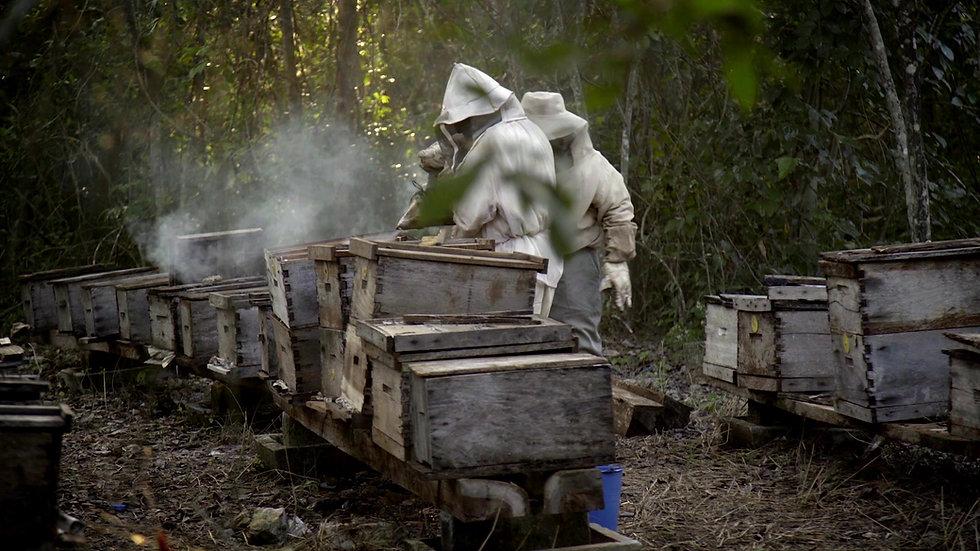 TRAILER ¿Qué les pasó a las abejas?