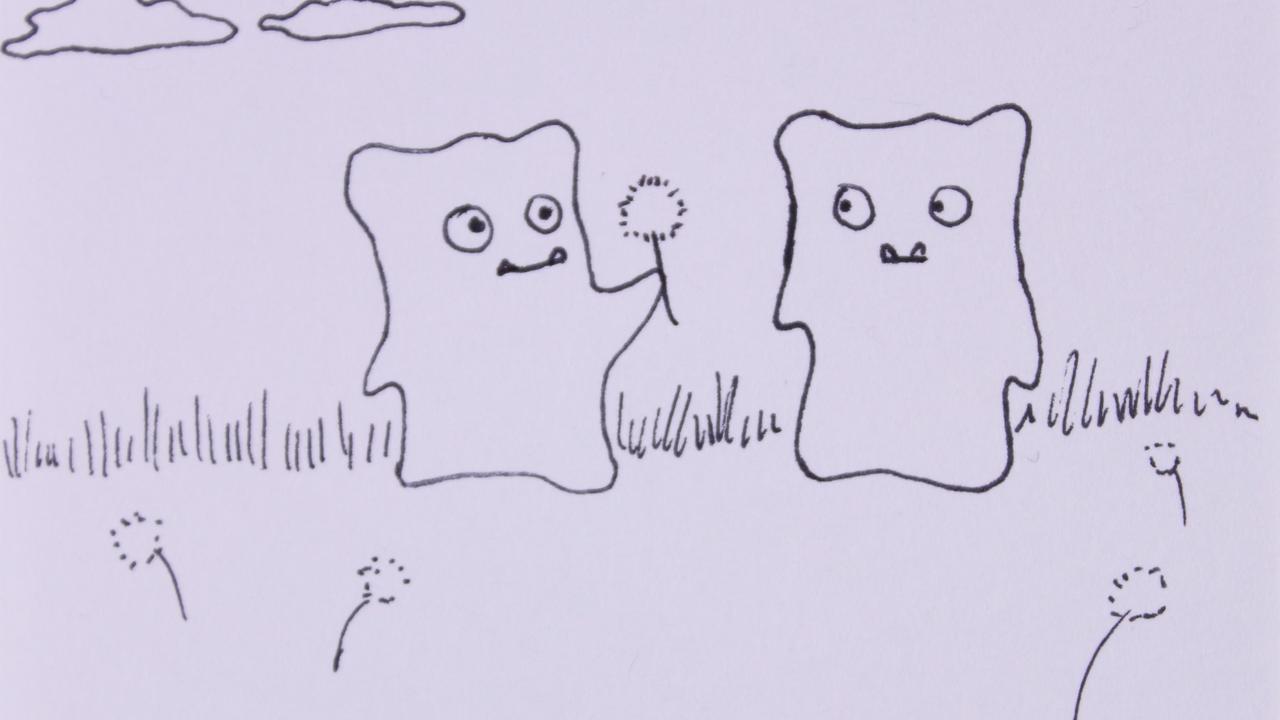 Storyboard/Animatic