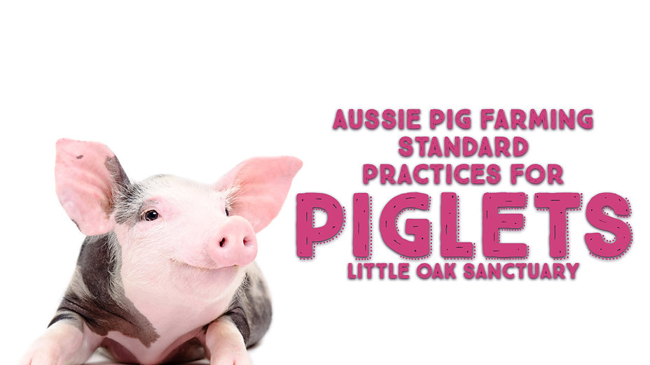 Standard practices for Piglets
