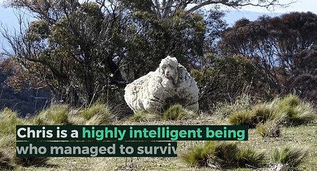 A Great Australian Survival Story