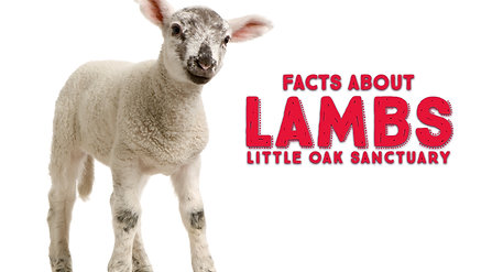 Facts about Lambs