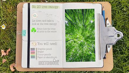 No 20 tree canopy