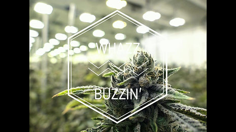 CBR Whazz Buzzin' 420 NO VOICE