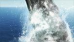 Seaworld Identity