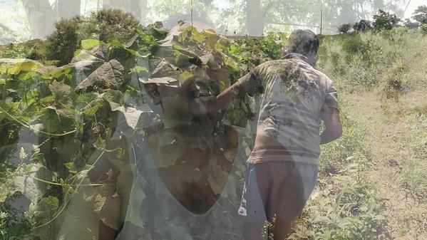East West Seed: Farmer Testimonials, Navneet Chand, Nasau, Nadi