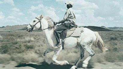 Silver Steed Karoo