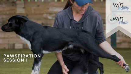 Pawspiration for Canine Exercise Session 1