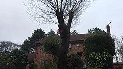 d rimmer tree willow fell