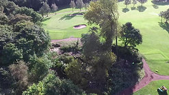 d rimmer tree ashton golf course tree fell