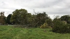 d rimmer tree ash tree fell slow mo