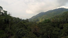 The rain forest landscape at Bukit Fraser