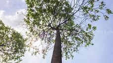 _2021-02-13-Lepi Tree ans Sky_HD-WZ-Breitband (Hoch)