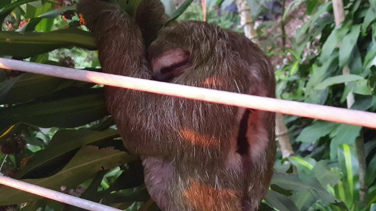 All Sloths welcome