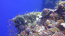 Rotes Meer - FAHNENBARSCHE 1