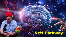 How to increase your energy through the Nrf1 pathway