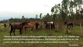 HORSEDREAM Argentina & Uruguay