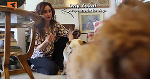 דיקור סיני לכלבים - אורלי זכאי DOG TV
