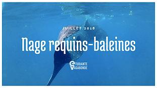 Nage avec les requins-baleines, Mexique