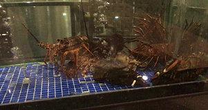 SeafoodTanks