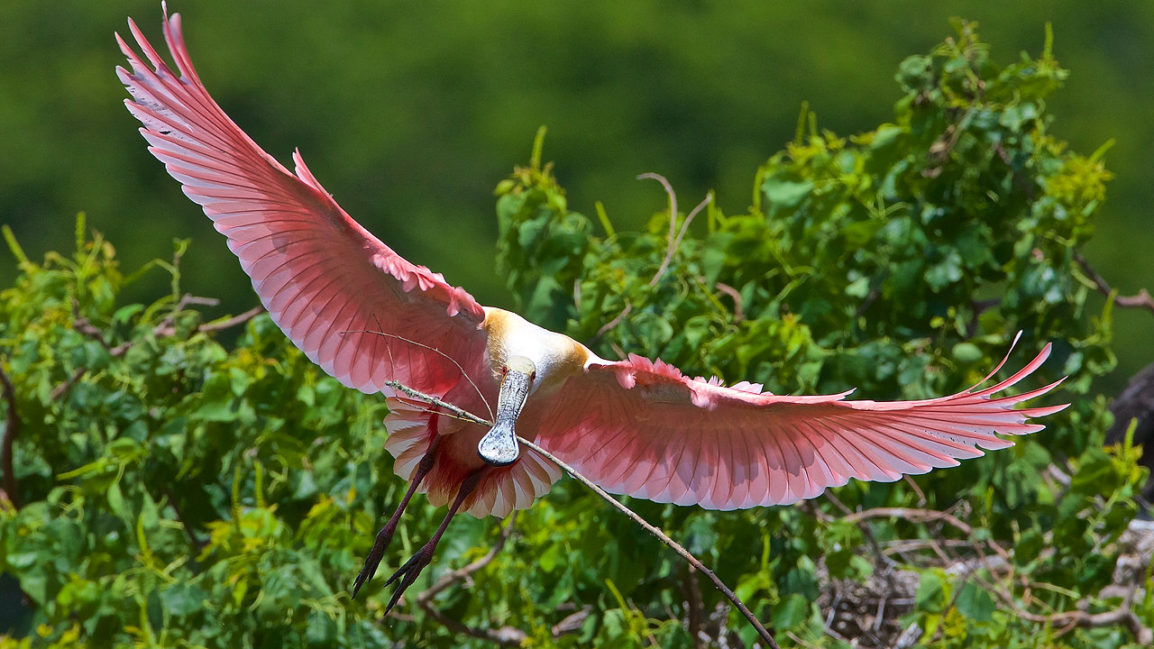 Birding in League City