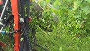 Weinbau61