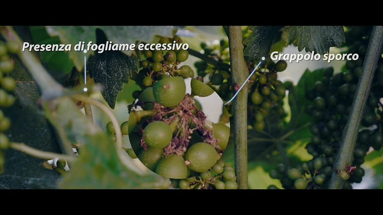 Videos Weinbau