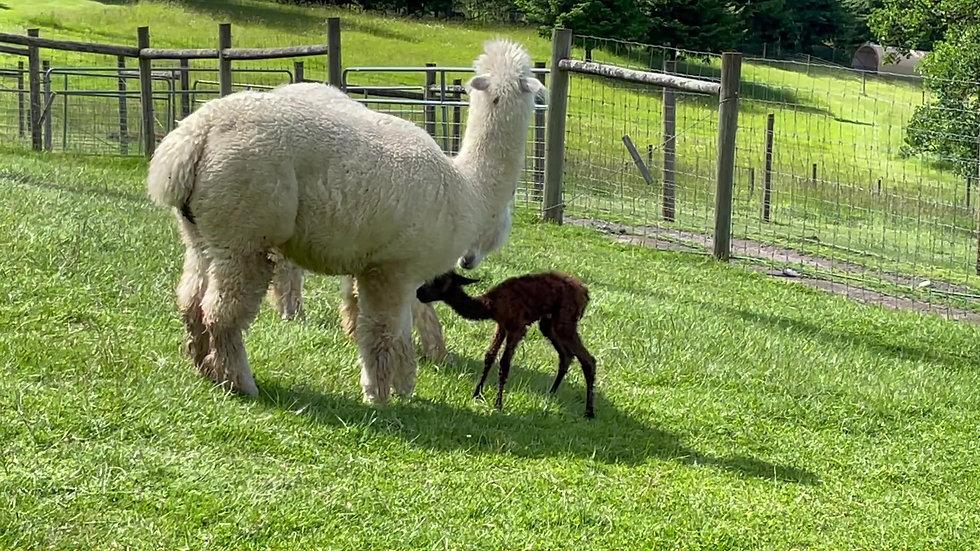 Victoria and newborn