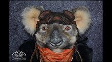 Koala Ernest