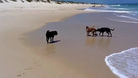 Pack Walking at Perth Beaches