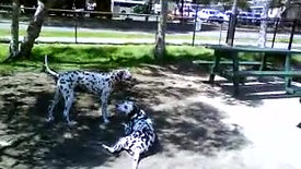 Pack walks - Playing at the Park