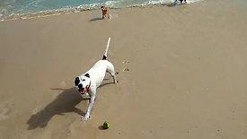 Pack Walking - Beach Time!