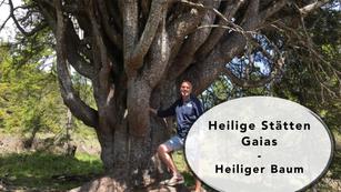Heilige Stätten Gaias - Heiliger Baum