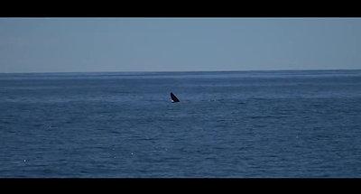 Iceland Yacht Charter on AQUA TV
