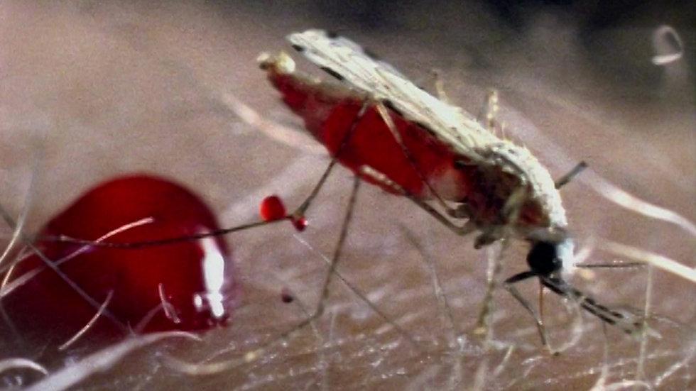 Mosquito Week Trailer