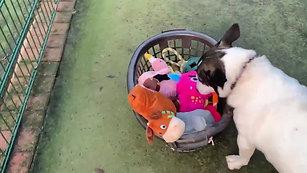 Panda Video 3