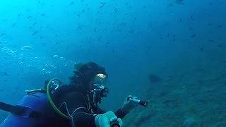 Ocean Reef - Underwater, naturally