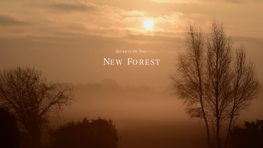 Secrets of the New Forest