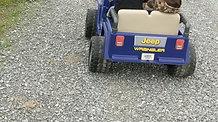 driving farm jeep!