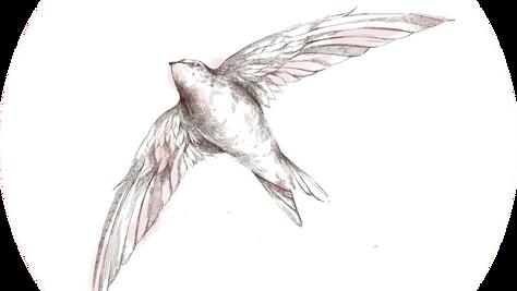 Proyecto Pájaro Rosa