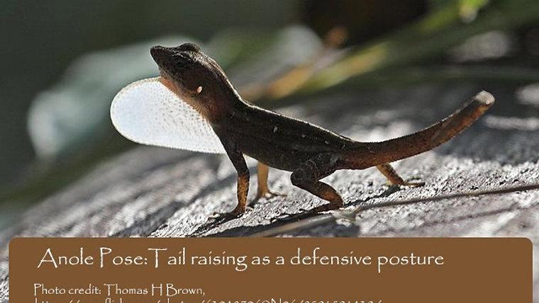 Lizard Yoga
