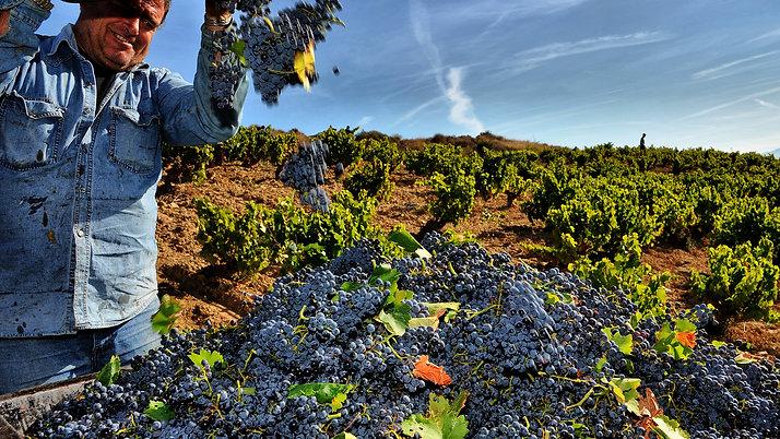 Bodegas Cialu en Rioja