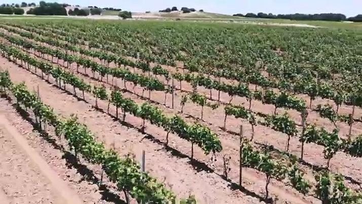 Viñedo Bodegas Balbás Ribera del Duero