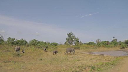 Sri Lanka-Udawalawe Safari_ENG Ver
