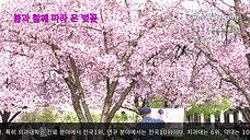 봄과 함께 따라 온 벚꽃