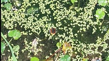 Cibolo Creek butterfly