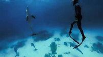 Golfinhos e Wrecks Egito, CANAL OFF TV
