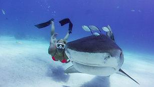 Shark Whisper teaser