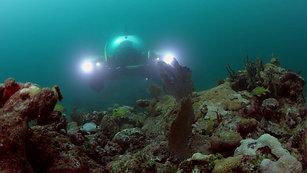 Philipe Cousteau, PSA