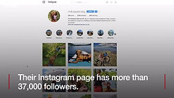 BBC Adventurous dog Pepper becomes Instagram star