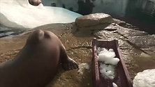 海象时间 Walrus Time